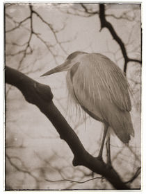 Vintage fauna: Heron by Miemo Penttinen