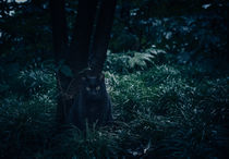 Black cat in the night by Miemo Penttinen