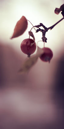 Winter berries by Miemo Penttinen