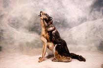 Wolf Bodypainting Illusion von Johannes Stötter
