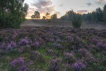 Lüneburger Heide Blumen von Dmytro Oleiynyk