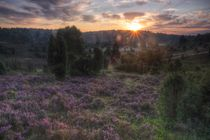 Sonnenaufgang am Totengrund in Lüneburger Heide von Dmytro Oleiynyk