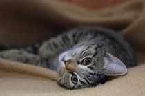 Katze auf einer Decke von Dmytro Oleiynyk