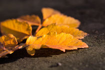 golden leafs by la-mola-lighthouse