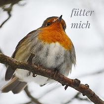 Rotkehlchen by Irmtraut Prien