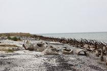 Ostgrenze by Ralph Portenhauser