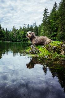 Dackel am Waldsee by Manuel Wiemann