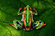 Frog Bodypainting Illusion by Johannes Stötter