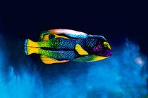 Angelfish Bodypainting Illusion von Johannes Stötter
