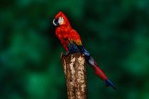 Parrot Bodypainting Illusion by Johannes Stötter