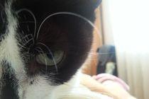 cat's eye von rute ferreira