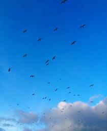 Vögel by galerie artgero