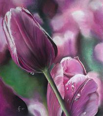 Tulpenblüten by Erhard Sünder