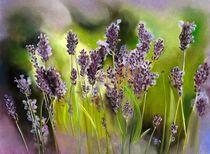 Lavendel von Erhard Sünder