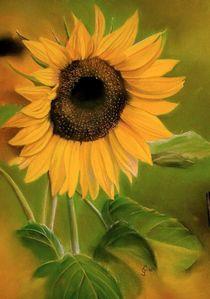 Sonnenblume by Erhard Sünder