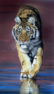 Tiger by Erhard Sünder