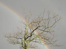 'Regenbogen' von maja-310