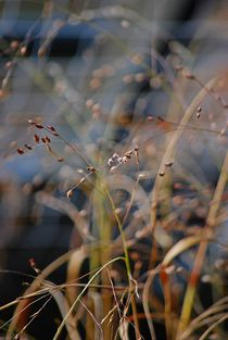 grass in autumn wind... 1 by loewenherz-artwork