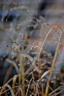 grass in autumn wind... 5 by loewenherz-artwork
