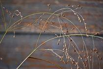 grass in autumn wind... 2 von loewenherz-artwork