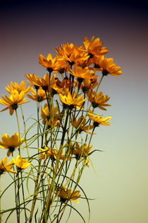 Blumenbund by Bastian  Kienitz