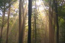 Licht im Herbstwald by Bernhard Kaiser