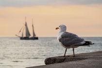 Segelschiff und Möwe auf der Hanse Sail in Rostock by Rico Ködder