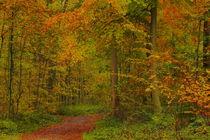 Herbstwald von maja-310