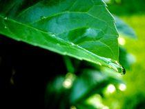 Blatt mit Wassertropfen  by yvi-mueller