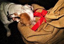 auch Hunde lieben Weihnachten und eine Bescherung ! by assy
