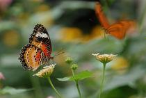 Schönheit der Natur 1 by Stefan Wehmeyer