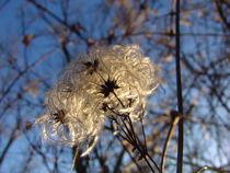 Schönheit im Herbst von Stefan Wehmeyer