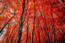 Red Forest of Sunlight von John Williams