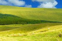 Im Brecon Beacons National Park by gscheffbuch
