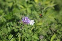 Biene, Schmetterling und Blume by pedi