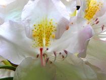 Orchidee von Cornelia Greinke