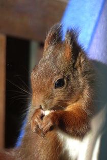 'Eichhörnchen-2' von maja-310