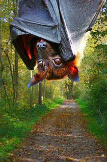 Flugfuchs im Wald by kattobello
