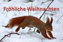Weihnachtspostkarte Eichhörnchen im Winter von kattobello