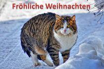 Weihnachtspostkarte Katze im Schnee von kattobello