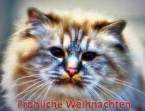 Weihnachtspostkarte Katze von kattobello