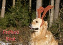 Weihnachtspostkarte Golden Retriever mit Geweih im Wald von kattobello