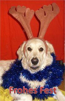 Weihnachtspostkarte Golden Retriever mit Geweih von kattobello