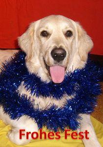 Weihnachtspostkarte Golden Retriever von kattobello
