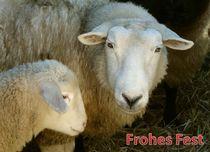 Weihnachtspostkarte Schaf mit Lamm von kattobello
