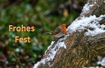 Weihnachtspostkarte Rotkehlchen im Winter von kattobello