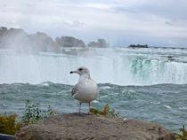Bird at the Horseshoe Falls  von Annika  Leichtweiss