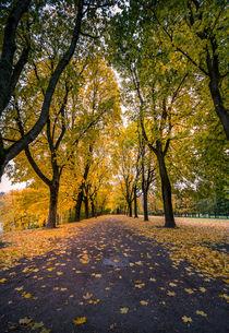 Autumn in the park von Nuno Borges