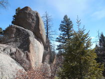 granite tor with pine von Ron Moses