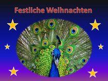 Weihnachtspostkarte Pfau von kattobello